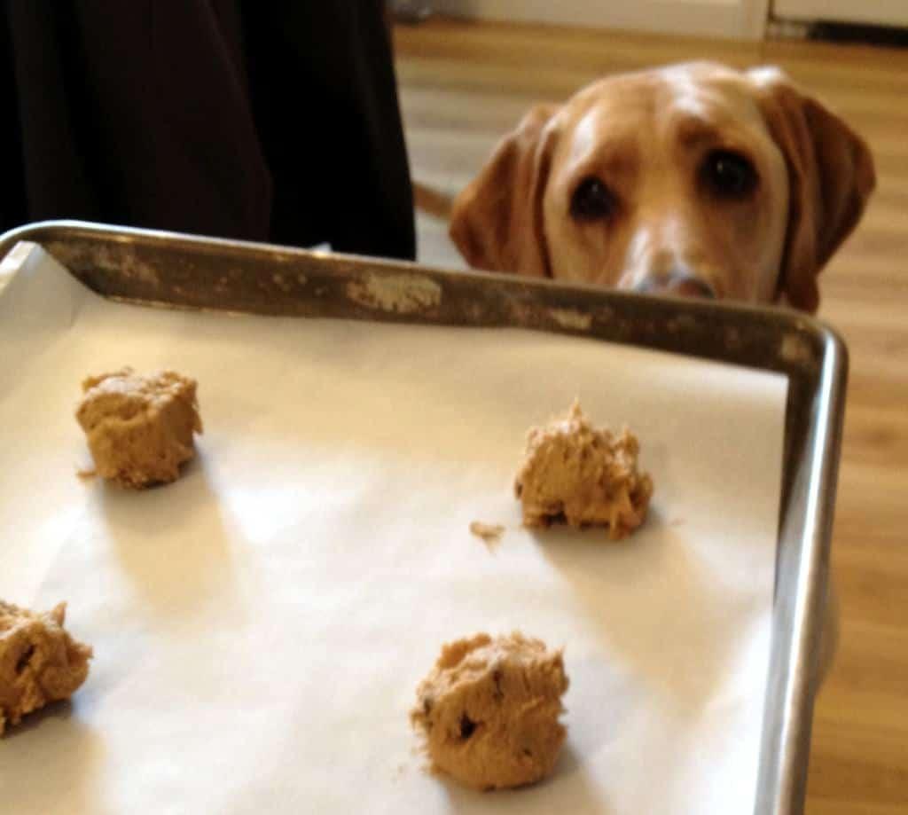 brown sugar chocolate chip cookies (cow chip cookies)