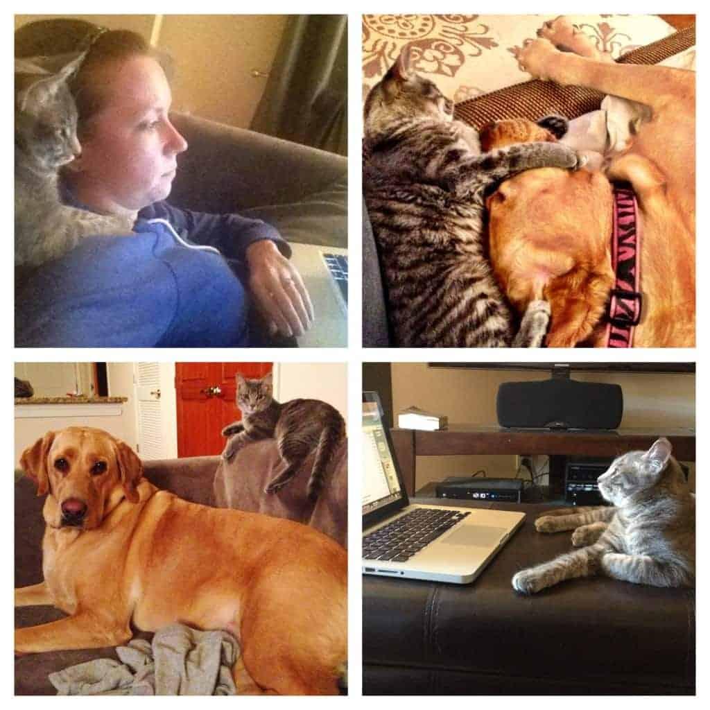 my blogging helpers