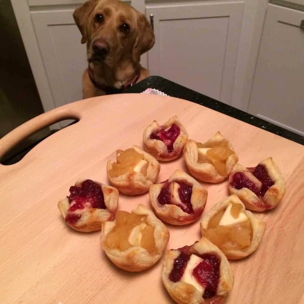 View of the Apple and Cranberry Brie Bites on the table, with a hungry dog looking at them.