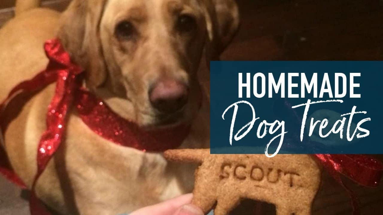 Homemade Peanut Butter Dog Treats