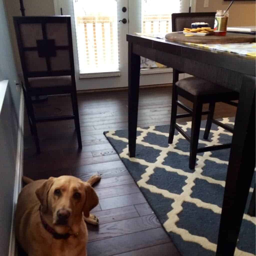 Image of a dog looking into the camera while a plate of crackers with Pepper Jelly Dip is on the table in the background.