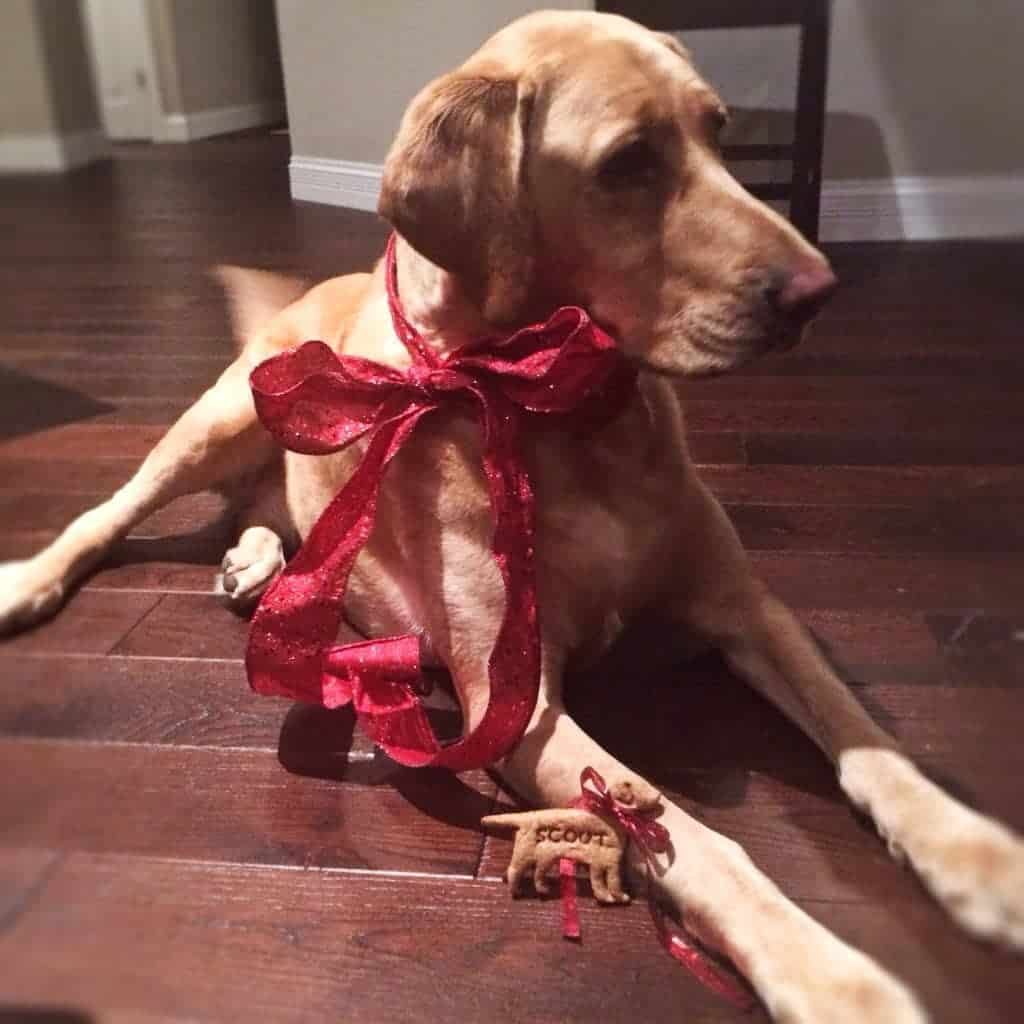 dog with red ribbon tied around it