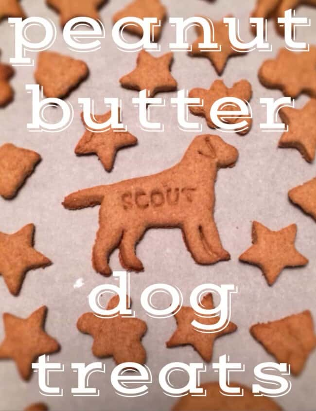 Homemade Dog Treats are the best way to show your pet that you love them like family! These HomemadePeanut Butter Dog Treatsare a Dog Biscuit Recipe that your fur baby would request every week if they could. If you've wondered How To Make Dog Treats, it's much easier than you might have thought. Your dog deserves these homemade treats and will be so excited!