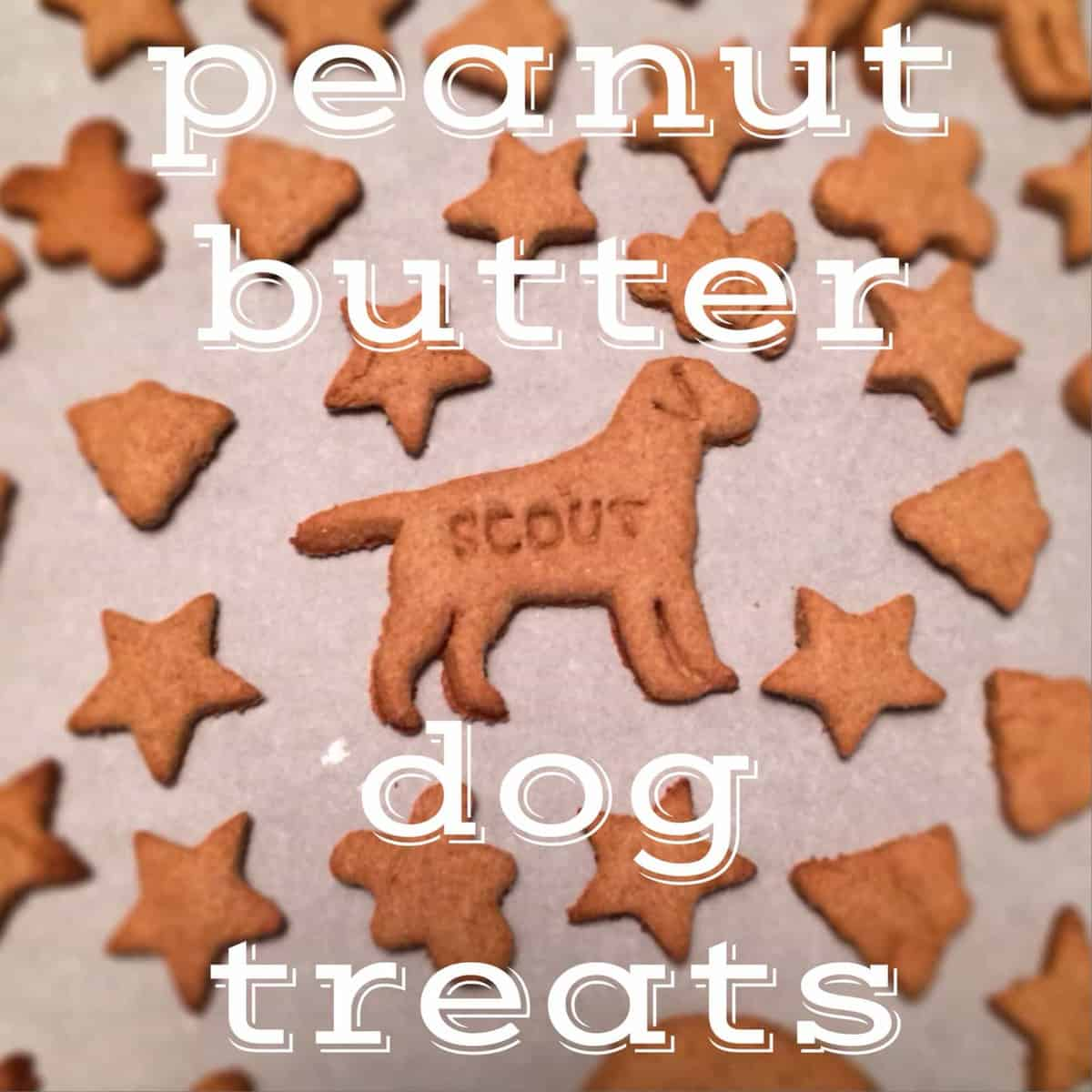 dog treats with text overlay: peanut butter dog treats