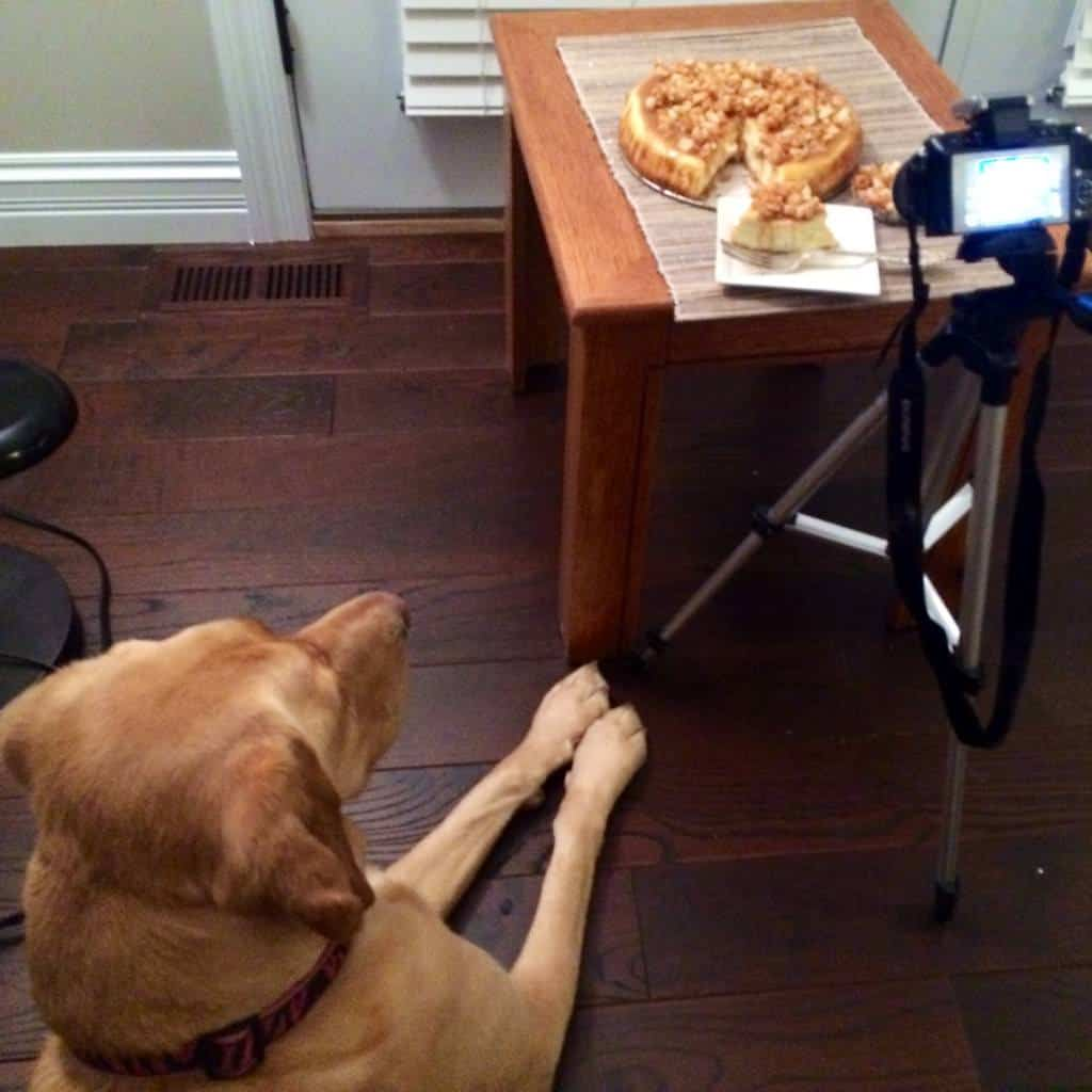 "scout from ""the cookie rookie"" oversees a food blog shoot.  she is my favorite :)"