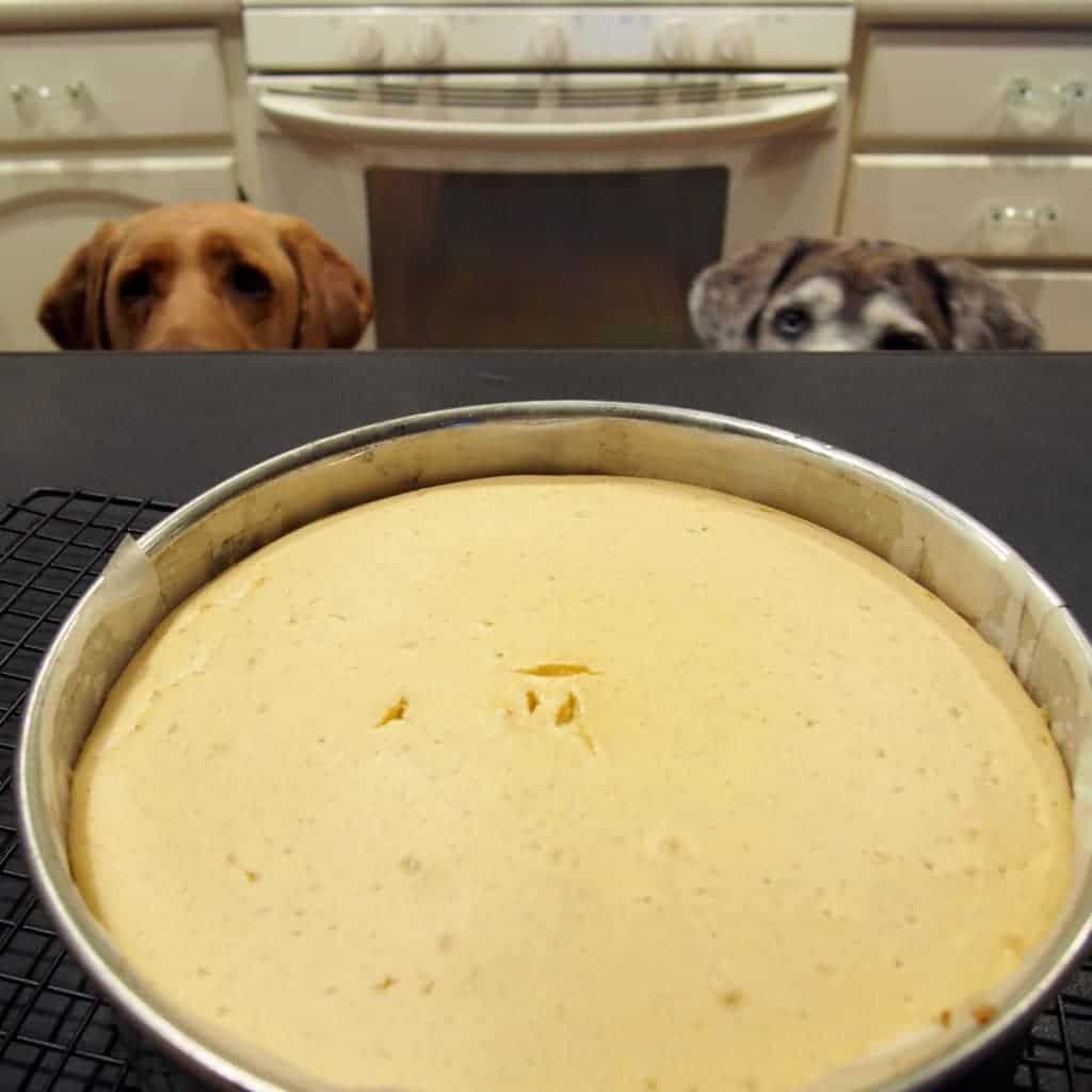delicious cheesecake recipe and adorable dogs!