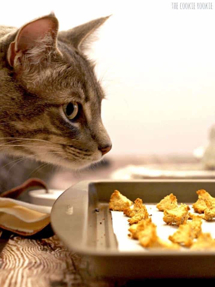 Homemade Salmon and Catnip Cat Treat Croutons! My cat LOVES these easy treats! - The Cookie Rookie