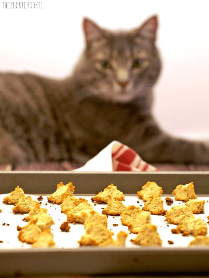 cat longingly looking at DIY Cat Treats