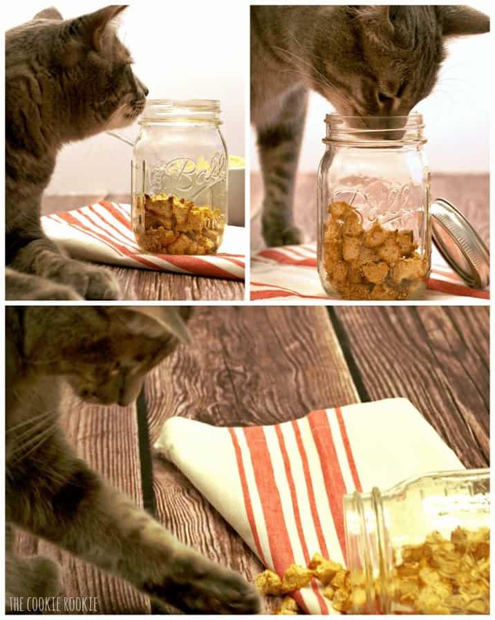feline sniffing jar