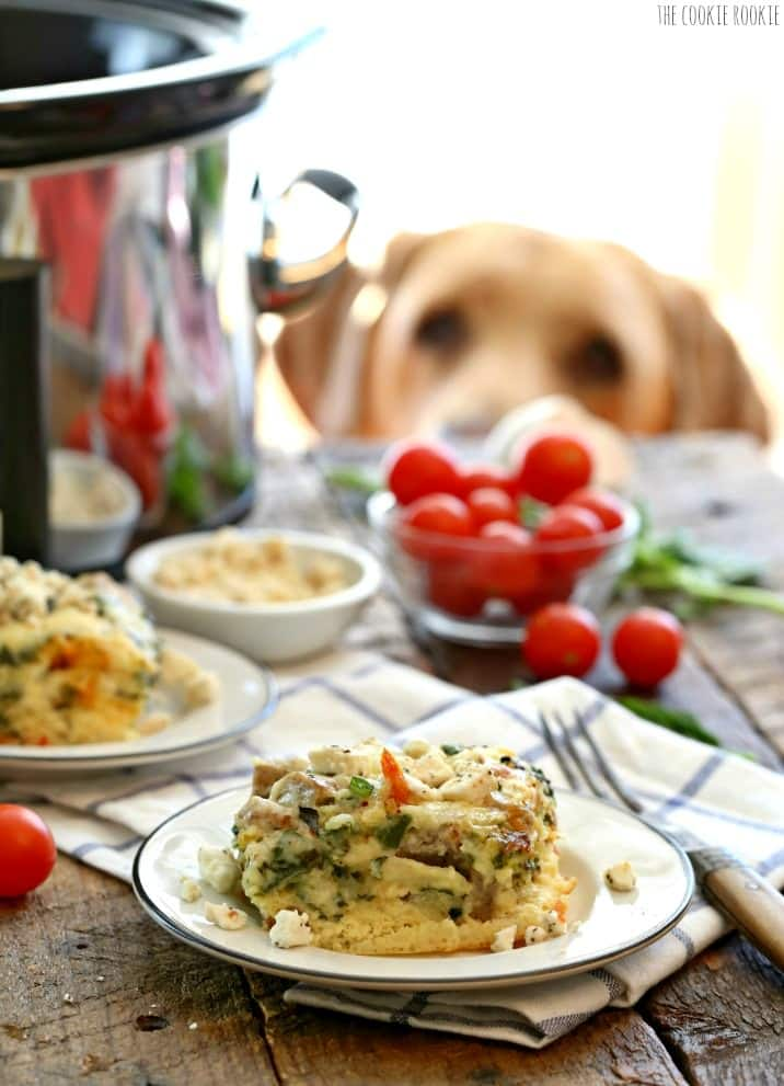 Dog looking at quiche on plate