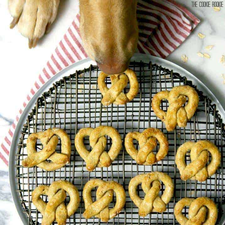 dog snout sniffing dog treats on a pan