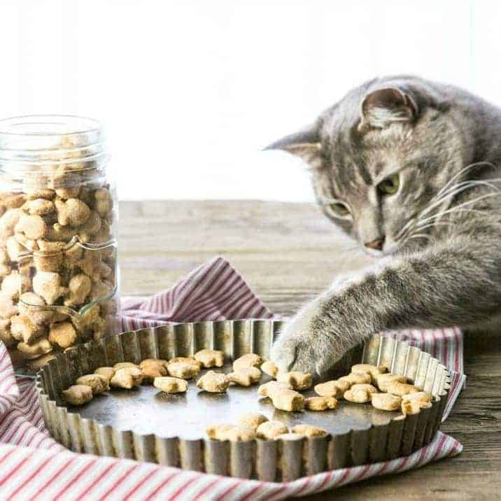 Homemade Cat Treats Recipe - 3 Ingredient Salmon Cat Treats