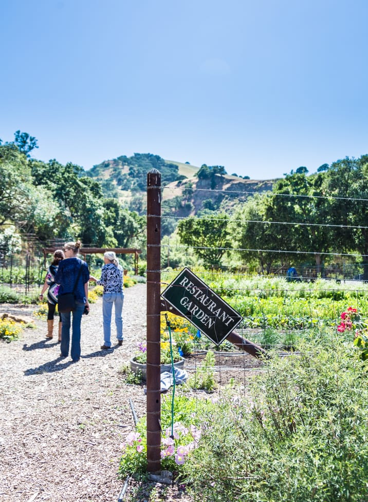 touring the grounds of Wente Vineyards