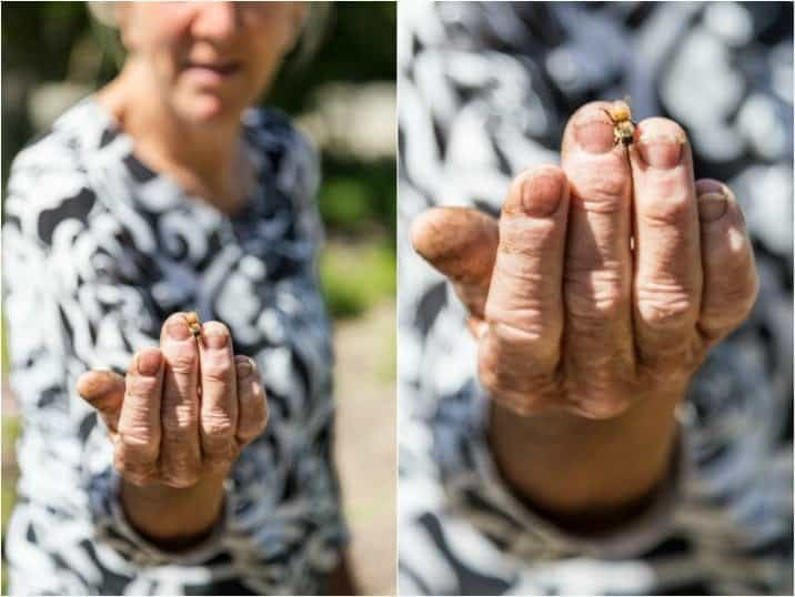 woman holding a honey bee at wente vineyards, livermore valley california