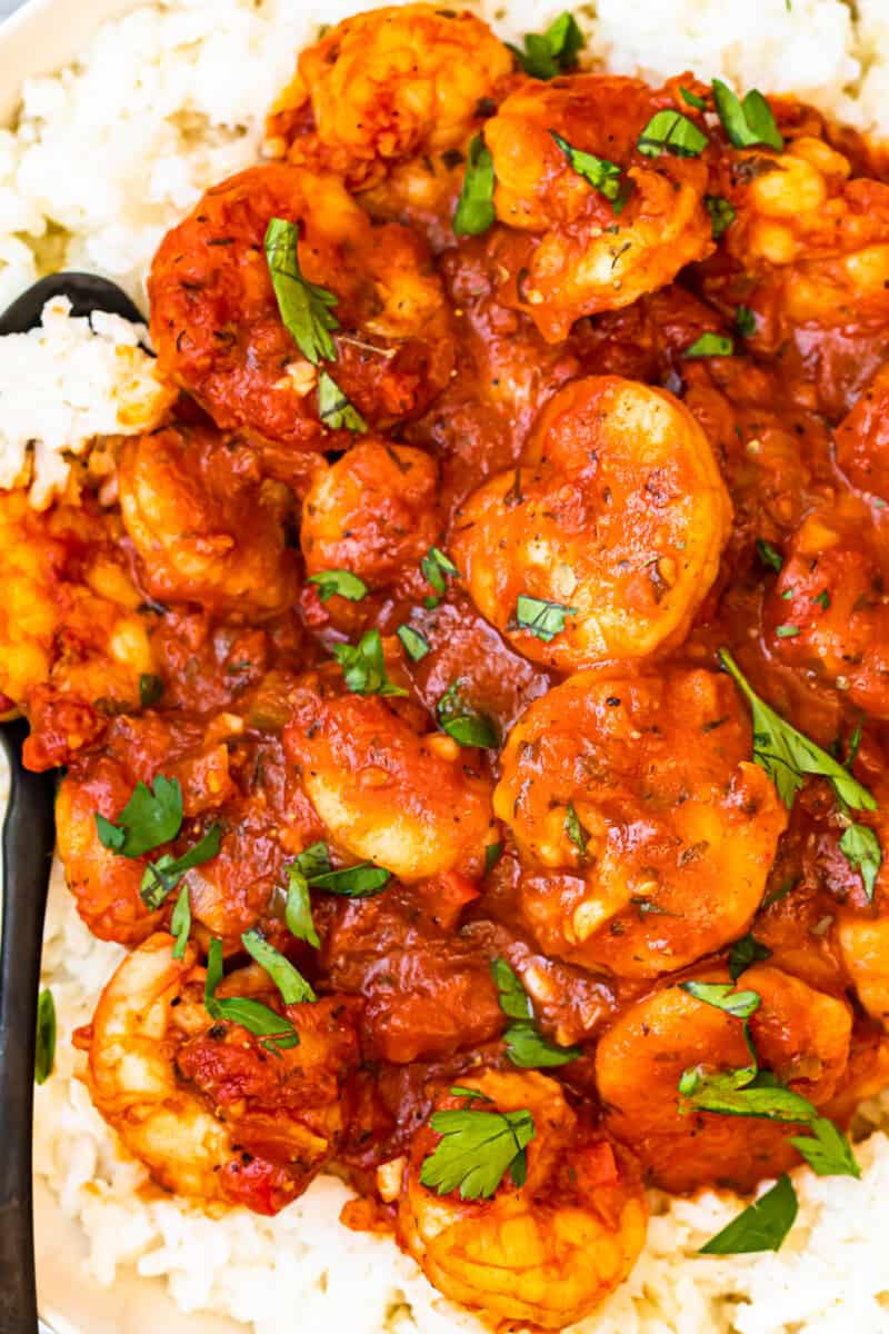up close creole shrimp served over rice